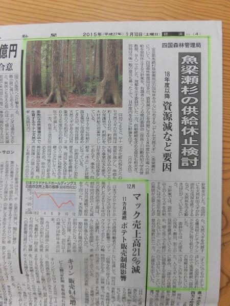 高知新聞記事(魚梁瀬杉)
